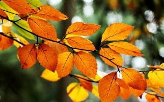 fall-tree-leaves-nature-1